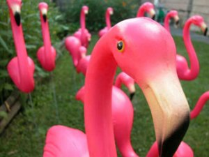 pink_flamingo2